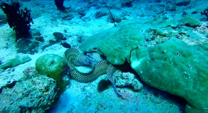 Photo from Ali's video, honeycomb eels